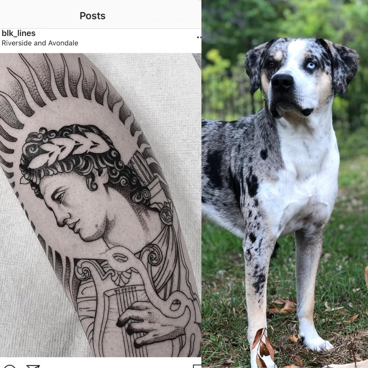 Second piece of my Greek mythology leg sleeve. Apollo, for my dog Apollo. Color this week! Done by Robby Sanders at VA studio in Jax, FL.