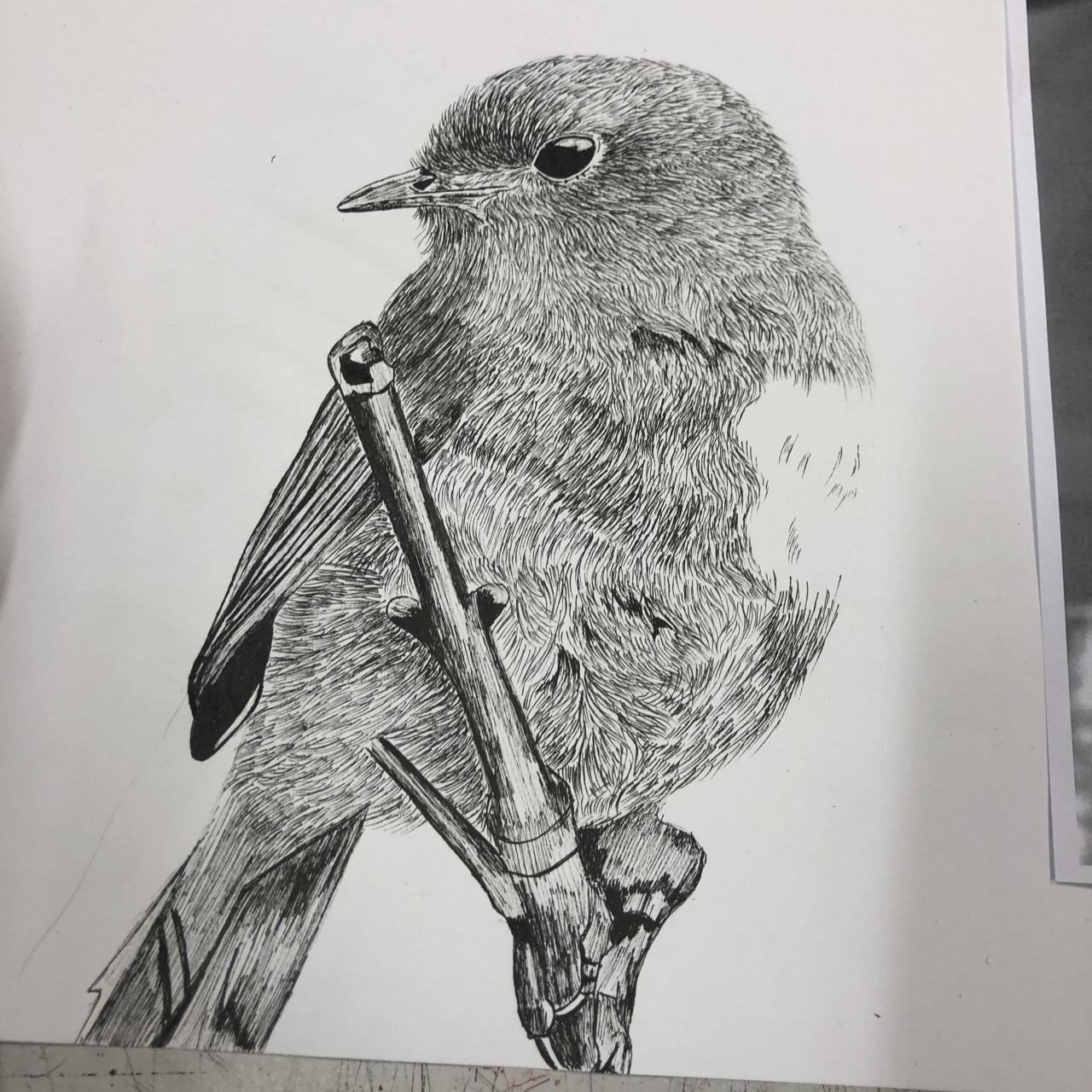 Illustration of bird :)