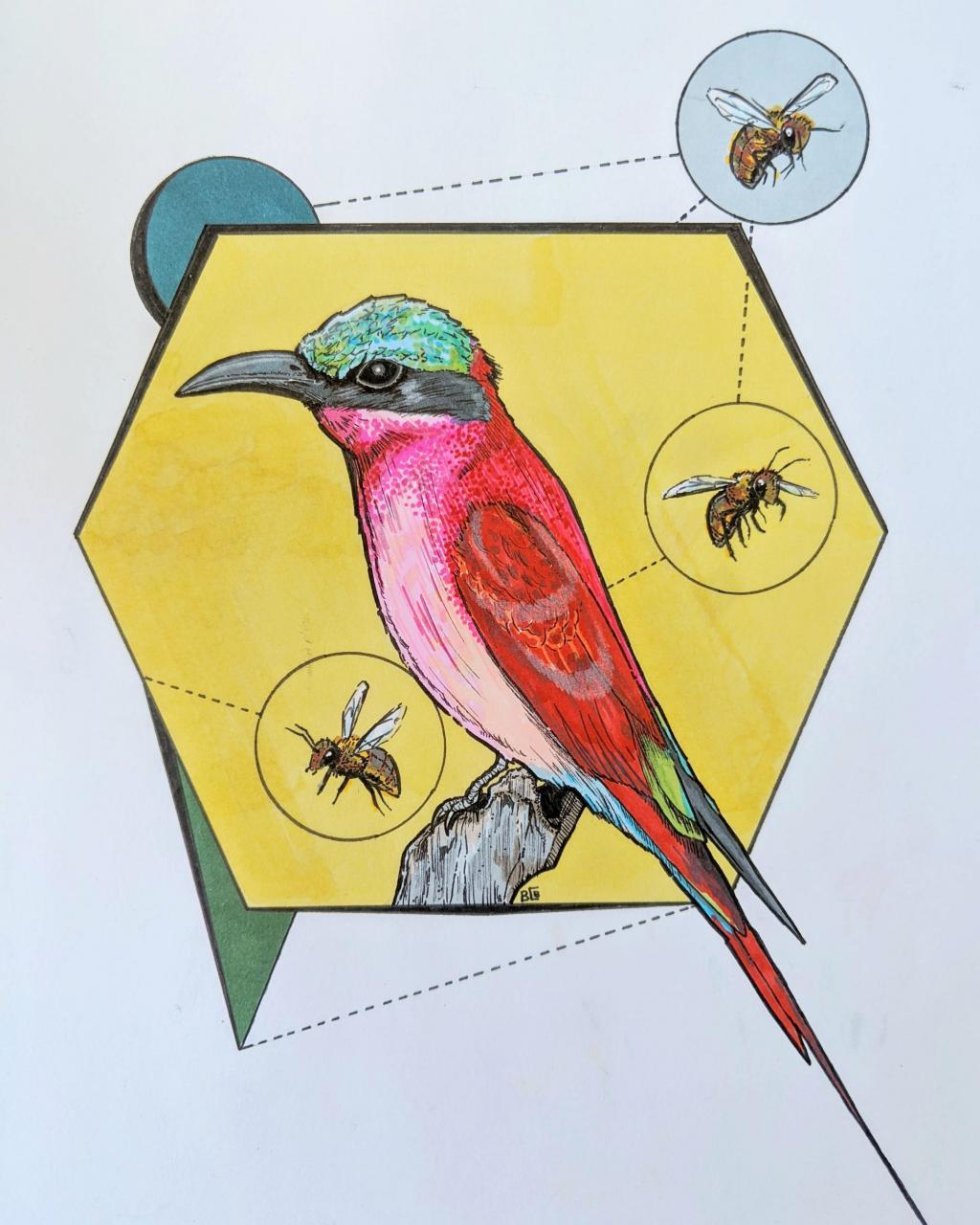 The northern carmine bee-eater. Friend of mine is a huge bird fanatic and asked me to design a tattoo of this crimson beauty. More on Instagram @DoctorGrumble.