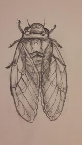 Kinda messy cicada design