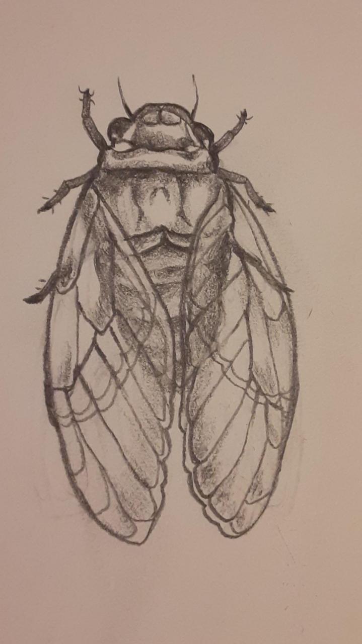 Kinda messy cicada design
