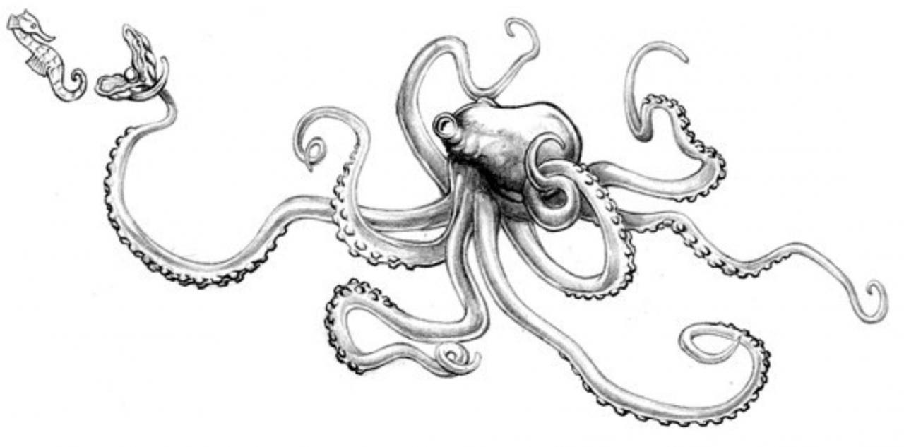 unused Octopus thigh design for a girl. Missed the mark perhaps, but not a lot of direction. given