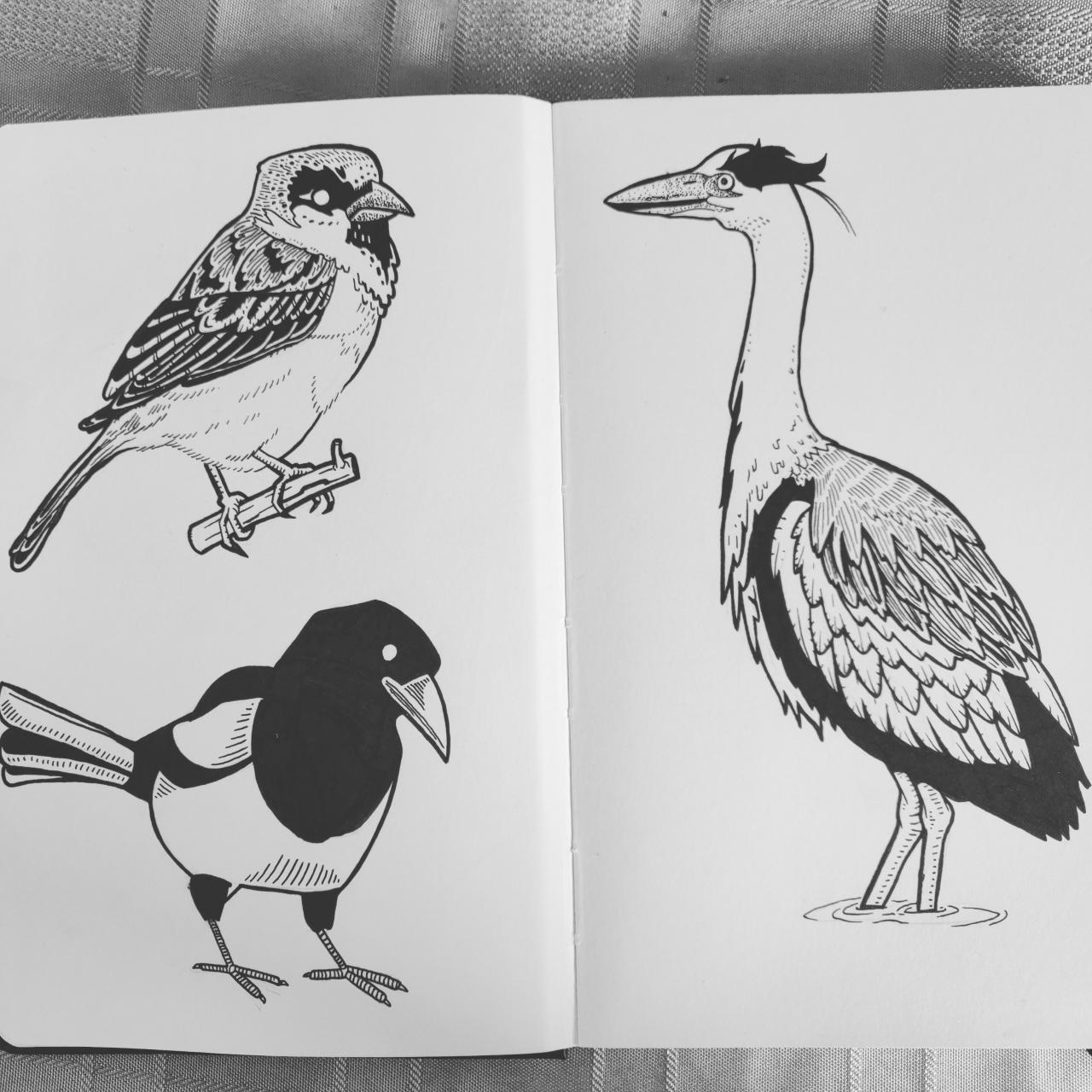 Some Designs Based on Local Birds