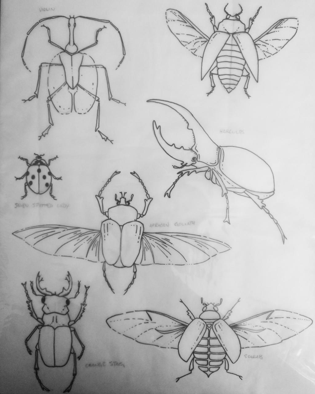 Beetles for Tattoo portfolio. Any criticism welcome.